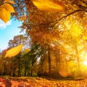 Praxisurlaub Herbst