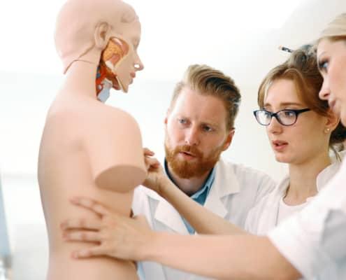 Medizinstudenten am Anatomiemodell